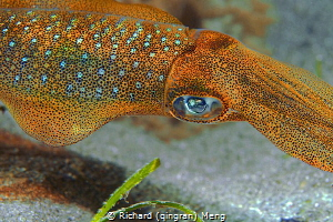 The amazing chromatophore cells on the skin of an octopus. by Richard (qingran) Meng