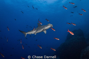 """""""Clean Me"""" The Hammerheads would almost freeze their mot... by Chase Darnell"""