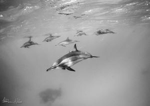 Squadron by Steven Miller