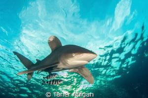 Shark in the sky by Taner Atilgan