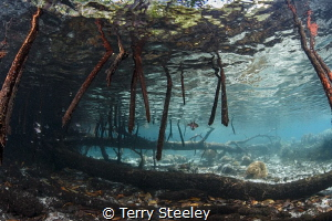 'The Passage'. by Terry Steeley