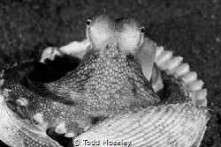 Coconut octopus in B&W by Todd Moseley