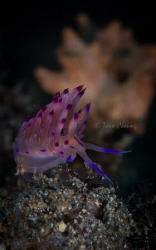 Flabellina Rubrolineata by Taco Cheung