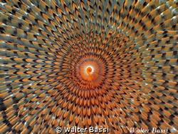 Hypnotic by Walter Bassi