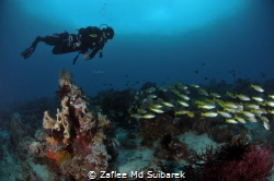KEEP CALM and DIVE by Zaflee Md Suibarek