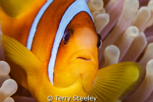 All the world loves a clownfish. by Terry Steeley
