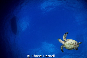 """""""Sky Flying"""" I love interacting with Turtles mid water. ... by Chase Darnell"""
