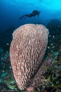 Anilao Reefs.... by John Parker