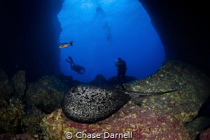 """""""Marble Crusiing"""" A Marbled Ray inside the arch at Dos A... by Chase Darnell"""