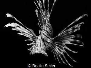 Lionfish B/W by Beate Seiler