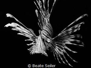 Lionfish B/W by Beate Seiler