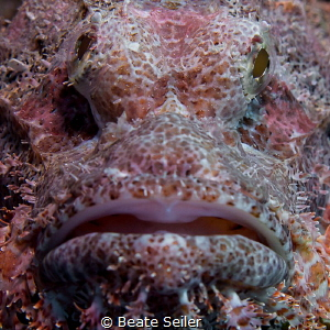 So close , scorpionfish by Beate Seiler