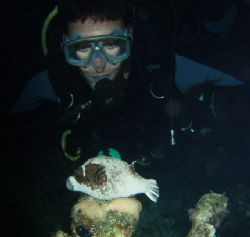 Diver and sleeping masked puffer taken at Sharksbay, Sina... by Nikki Van Veelen