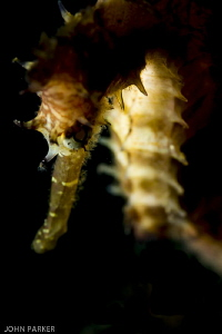 Seahorse .... by John Parker