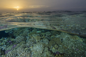 Sunset in the coral fields by Dmitry Starostenkov