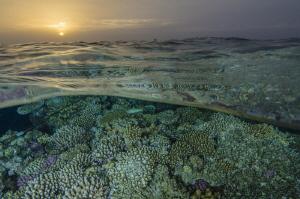 Sunset in the coral fields by Dmitry Starostenkov
