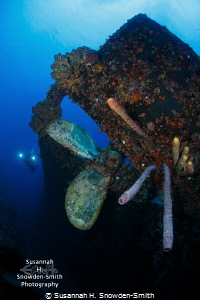 The stern of the shipwreck Hilma Hooker is covered in col... by Susannah H. Snowden-Smith
