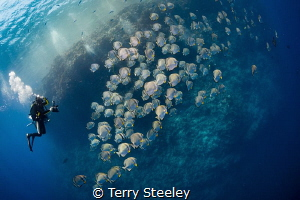 Bat fish madness by Terry Steeley