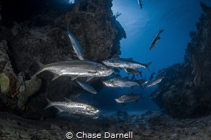 """""""Tarpon Cave"""" The Tarpon Cave at Macabuca is always fill... by Chase Darnell"""