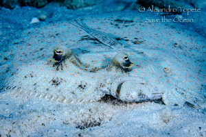 Flounder look, Bonaire by Alejandro Topete