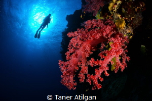 Silhouette by Taner Atilgan