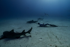 Laying on the bottom of their world by Michael Dornellas