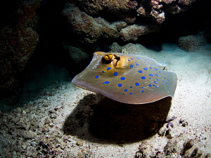 BLUE SPOTTED by Marko Perisic