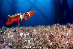 Elf on the Eureka oil rig. by Kirk Wester
