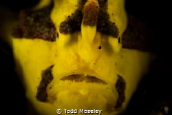 Frogfish by Todd Moseley