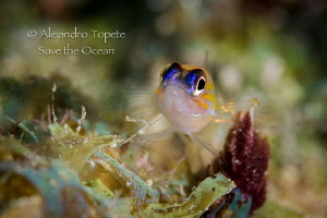 Litle Fish with ligth, leonore Bonaire by Alejandro Topete