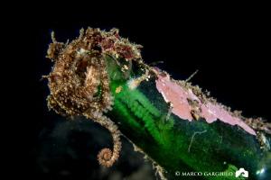 Octopus in a bottle by Marco Gargiulo