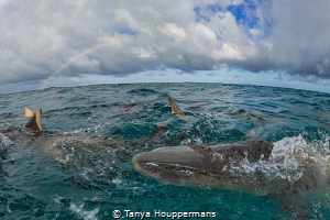 Better Than A Pot Of Gold