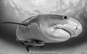 The Grey Lady