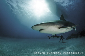 Then there was 3 .... Diver spending  few moments alone w... by Steven Anderson