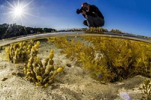 tide pool photographer (Kangaroo island) by Mathieu Foulquié