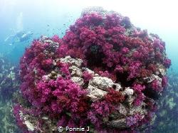Always better underwater by Ponnie J
