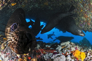 ~ Cornered ~  When the seals deiced to join you in the ... by Geo Cloete