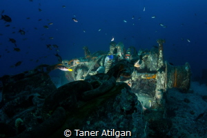 Chains of Thistlegorm by Taner Atilgan