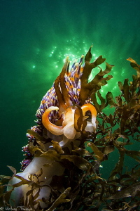 Wide angle close focus Nudi (Thau lagoon) by Mathieu Foulquié