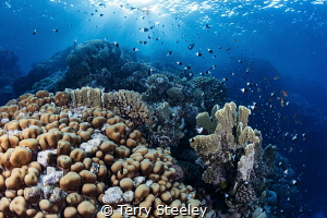 The joy of the reef. by Terry Steeley