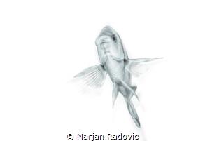 Like bird by Marjan Radovic