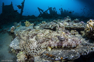 Crocodile Fish on The Barge by John Parker