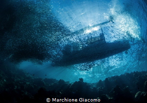Under the boat Moal Boal . Philippines. Nikon D800E , 1... by Marchione Giacomo