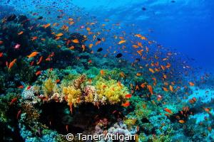 Colors by Taner Atilgan