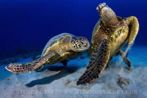 Turtles by Stuart Ganz