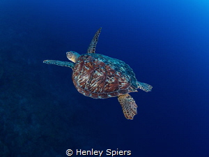 Green over Blue by Henley Spiers