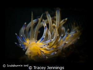 Delicate flower by Tracey Jennings