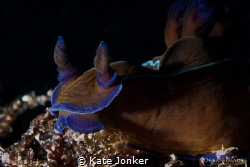 Black Nudibranch photographed at Blousteen in Gordon's Ba... by Kate Jonker