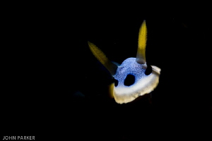 Snooted Nudi by John Parker