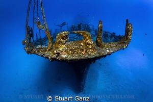 The Sea Tiger by Stuart Ganz